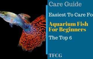 6 Easy Freshwater Aquarium Fish For Beginners