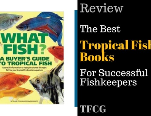 6 easy freshwater aquarium fish for beginners tfcg for Easiest fish to care for
