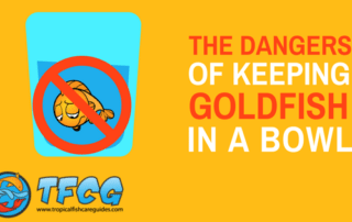 Can Goldfish Live In A Bowl - The Dangers of Keeping Goldfish in a Bowl