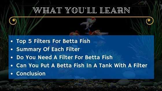 Best Betta Filter - WYL