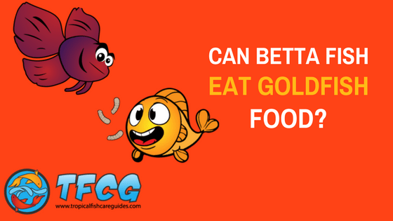 Can Betta Fish Eat Goldfish Food-