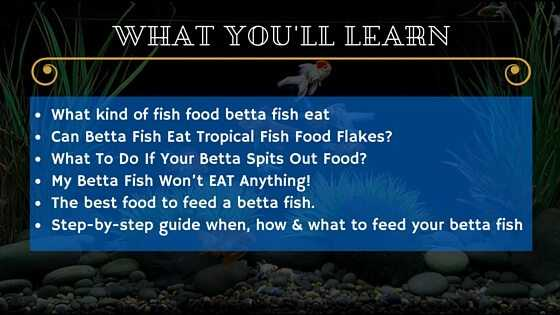 What do betta fish eat only use these 5 best types of for What is the best fish to eat