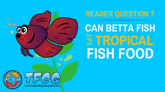 What do Betta Fish Eat- Use These 5 Best Types Of Betta Fish Food