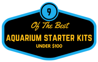 9-of-the-best-starter-fish-tank-kits-under-100