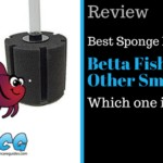 Best Sponge Filter For Betta And Other Small Fish