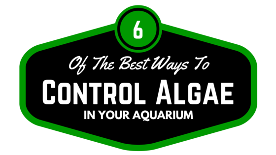 How To Kill Algae In Fish Tank