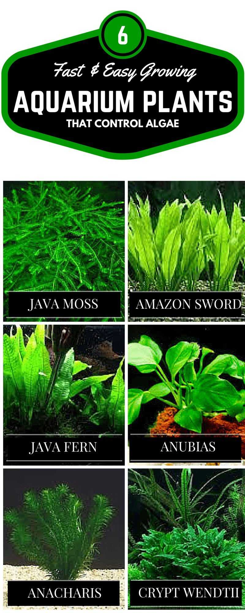 Algae control in aquariums