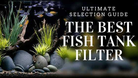 The Best Fish Tank Filter - Ultimate Selection Guide