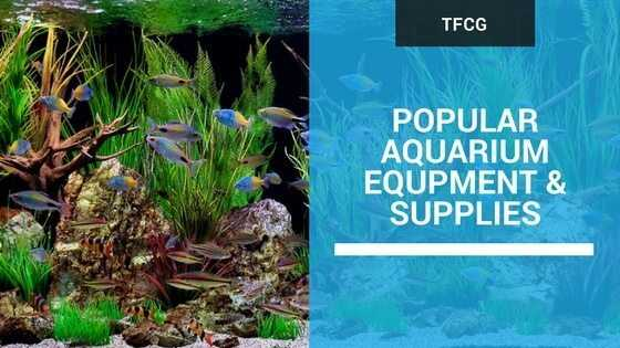 aquarium set up start setting up your aquarium the right way
