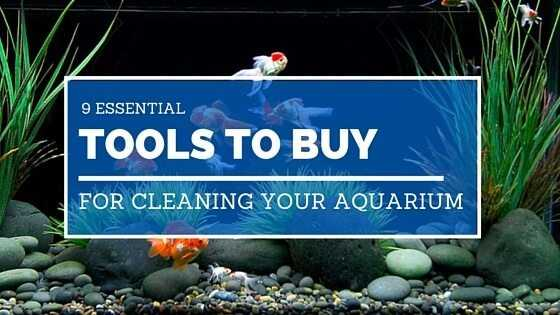 9 Essential Tools To Buy Cleaning Your Aquarium