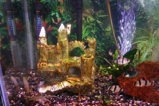 How to Get Rid of Brown Algae in Freshwater Aquaria