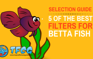 Selection Guide- Best Filter For Betta Fish (Review)