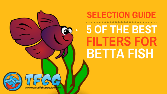 2019's best betta filter | you won't believe our #1 top pick [reviews]
