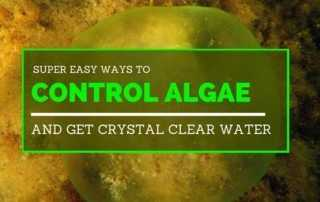 Super Easy Ways to Control Algae and Get Crystal Clear Water.