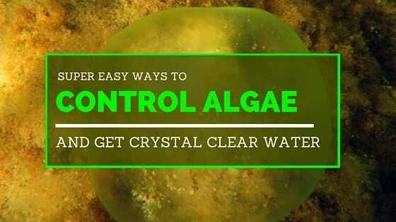 37 easy ways to control algae and get crystal clear for How to keep fish tank clean without changing water