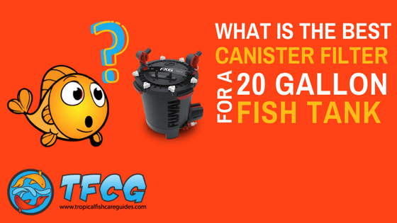 What Is The Best Canister Filter For A 20 Gallon Fish Tank.