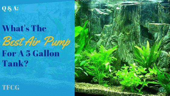 What's The Best Air Pump For A 5 Gallon Tank?