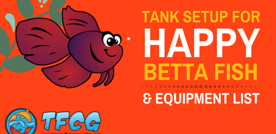 how to make your betta fish happy