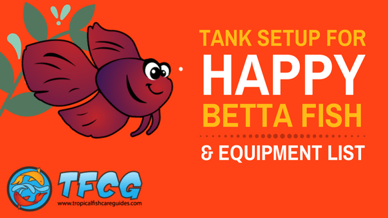 Best Betta Fish Tank Size For A Happy Betta Fish