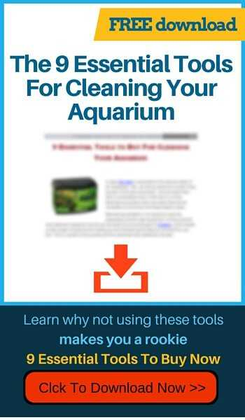 9 Essential Tools To Buy For Cleaning Your Aquarium