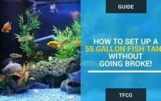 How To Set Up a 55 Gallon Fish Tank Without Going Broke!