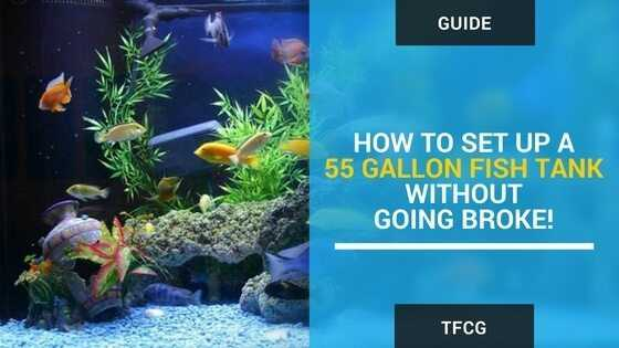 how to set up a 55 gallon fish tank without going broke
