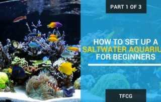 How To Set Up A Saltwater Aquarium For Beginners -Part 1 of 3