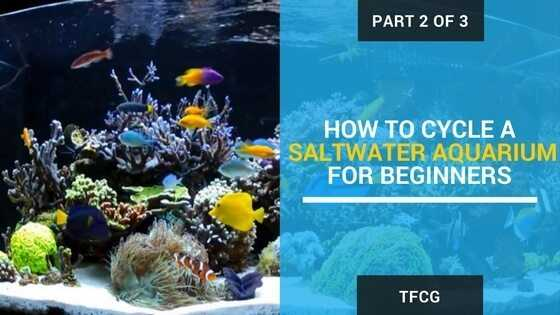 Part 2 of 3 - How To Cycle A Saltwater Aquarium For Beginners