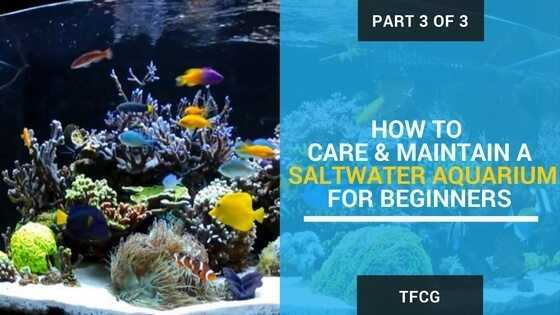 Part 3 of 3 - How To Care & Maintain A Saltwater Aquarium For Beginners