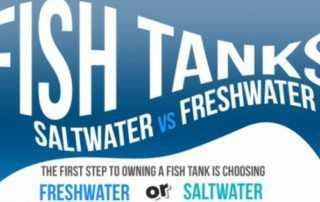 Saltwater-vs-Freshwater-Aquariums