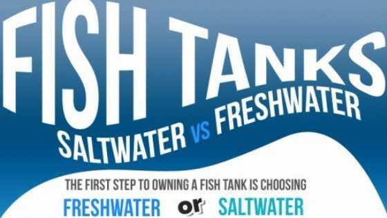 Saltwater-vs-Freshwater-Aquariums