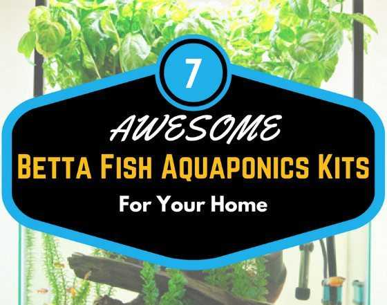 Basic betta fish care 101 what you really need to know for Easy to care for fish