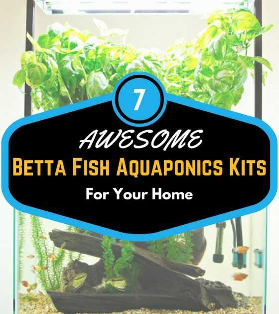 7 Awesome Betta Fish Aquaponics Kits For Your Home