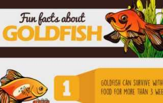 fun-facts-about-goldfish