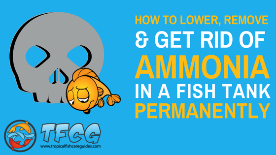 how to lower remove and get rid of ammonia in a fish tank