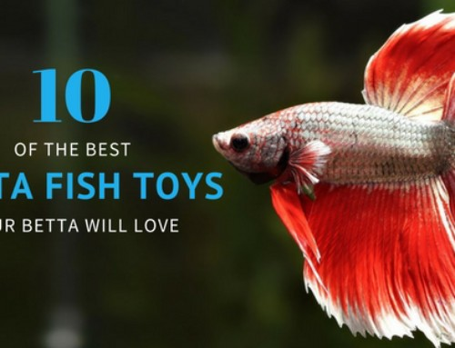 7 better options than a self cleaning betta fish tank tfcg for Toys for betta fish