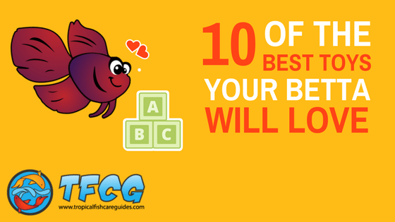 10 Of The Best Betta Fish Toys Your Betta Will Love