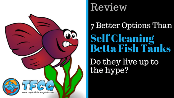 7 better options than a self cleaning betta fish tank tfcg for How to keep fish tank clean without changing water
