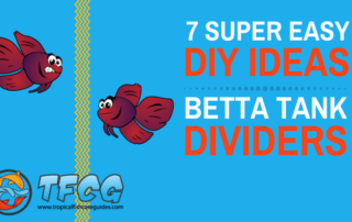7 Easy DIY Ideas for Betta Fish Tanks with Divider