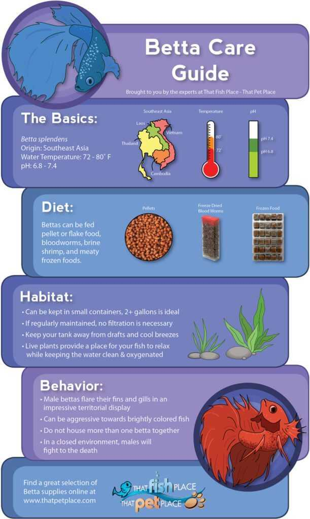 Betta Care Infographic