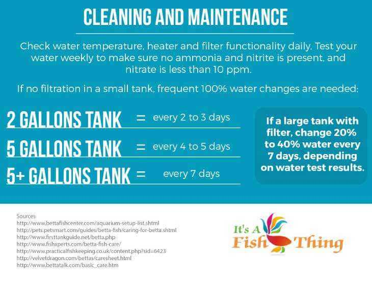 7 better options than a self cleaning betta fish tank tfcg for How often to feed fish
