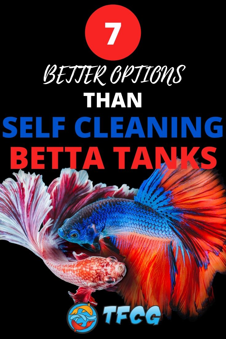 Self Cleaning Betta Tank Better & Safer Options For Your Betta