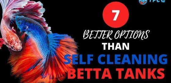 Self Cleaning Betta Tank Safer Options For Your Betta