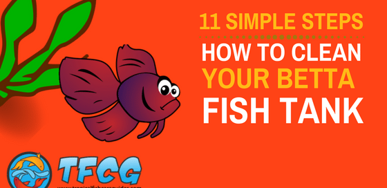 11 Steps Simplified- How To Clean a Betta Fish Tank