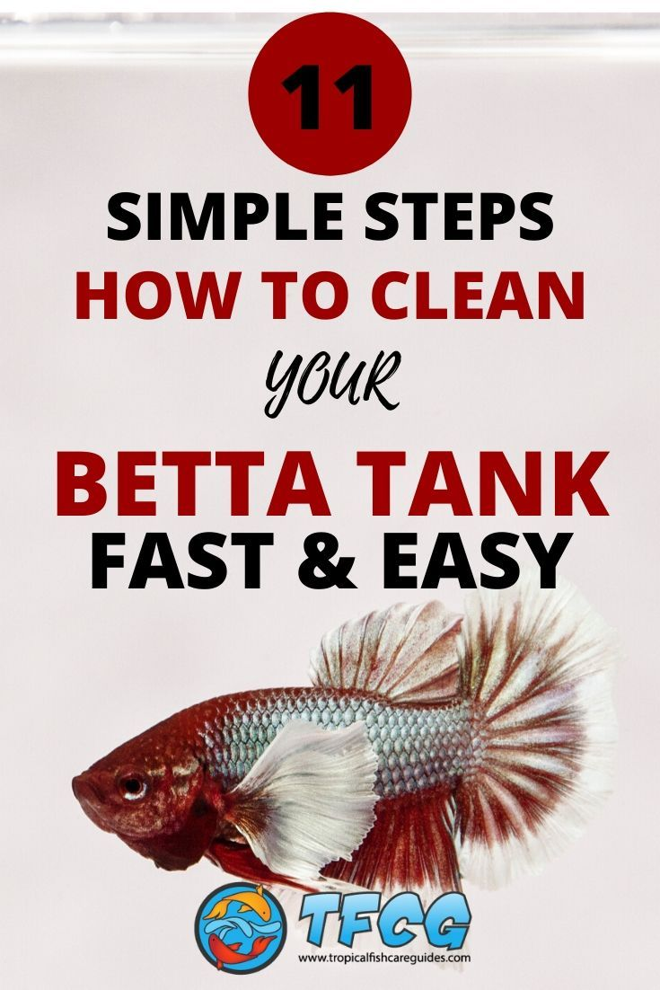 11 Steps Simplified How To Clean a Betta Fish Tank