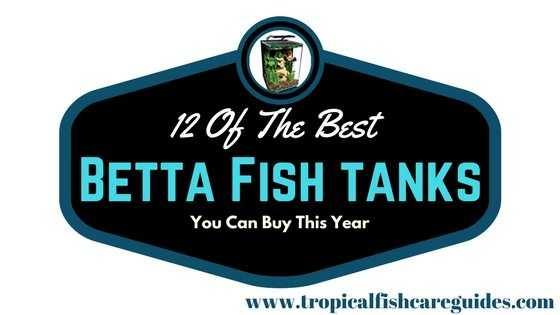 12 Of The Best Betta Fish Tanks You Can Buy For Your Betta