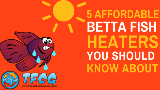 5 Affordable Betta Fish Heaters You Should Know About