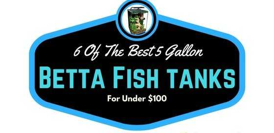 6 Of the best 5 Gallon Betta Fish Tanks For Under $100