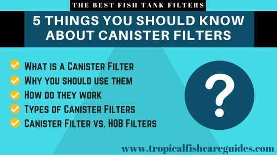 Best Fish Tank Filter- 5 Things You Should Know About Canister Filters