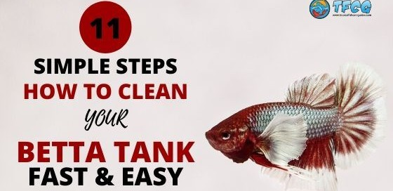 How To Clean a Betta Fish Tank